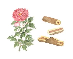 Thành phần thảo dược trong BB Kose - Botanpi