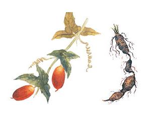 Thành phần thảo dược trong BB Kose - Merosuria